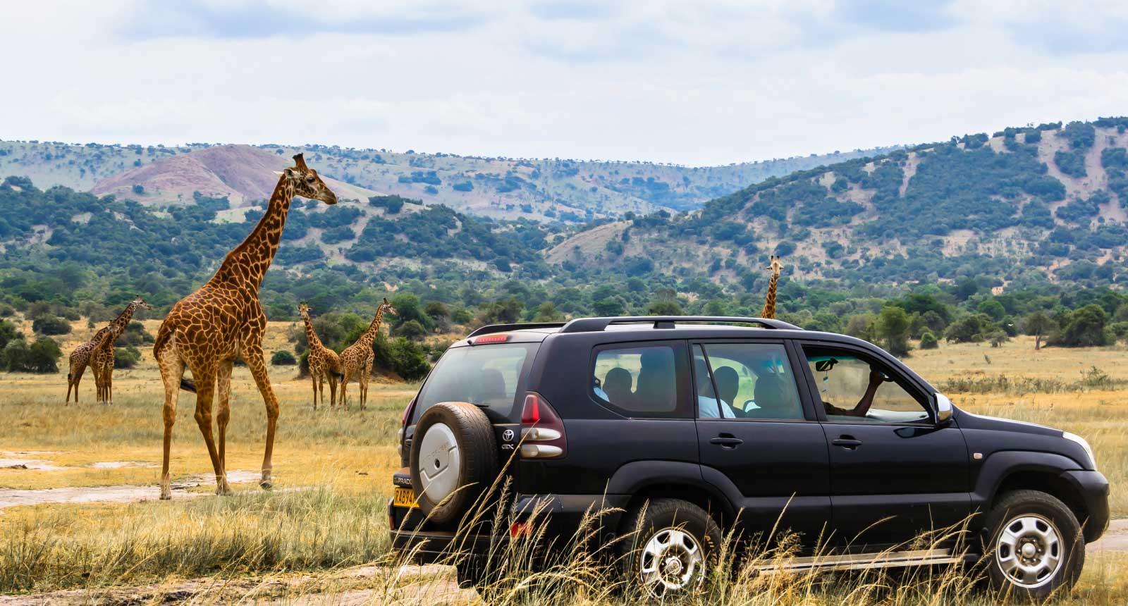 Akagera Safari
