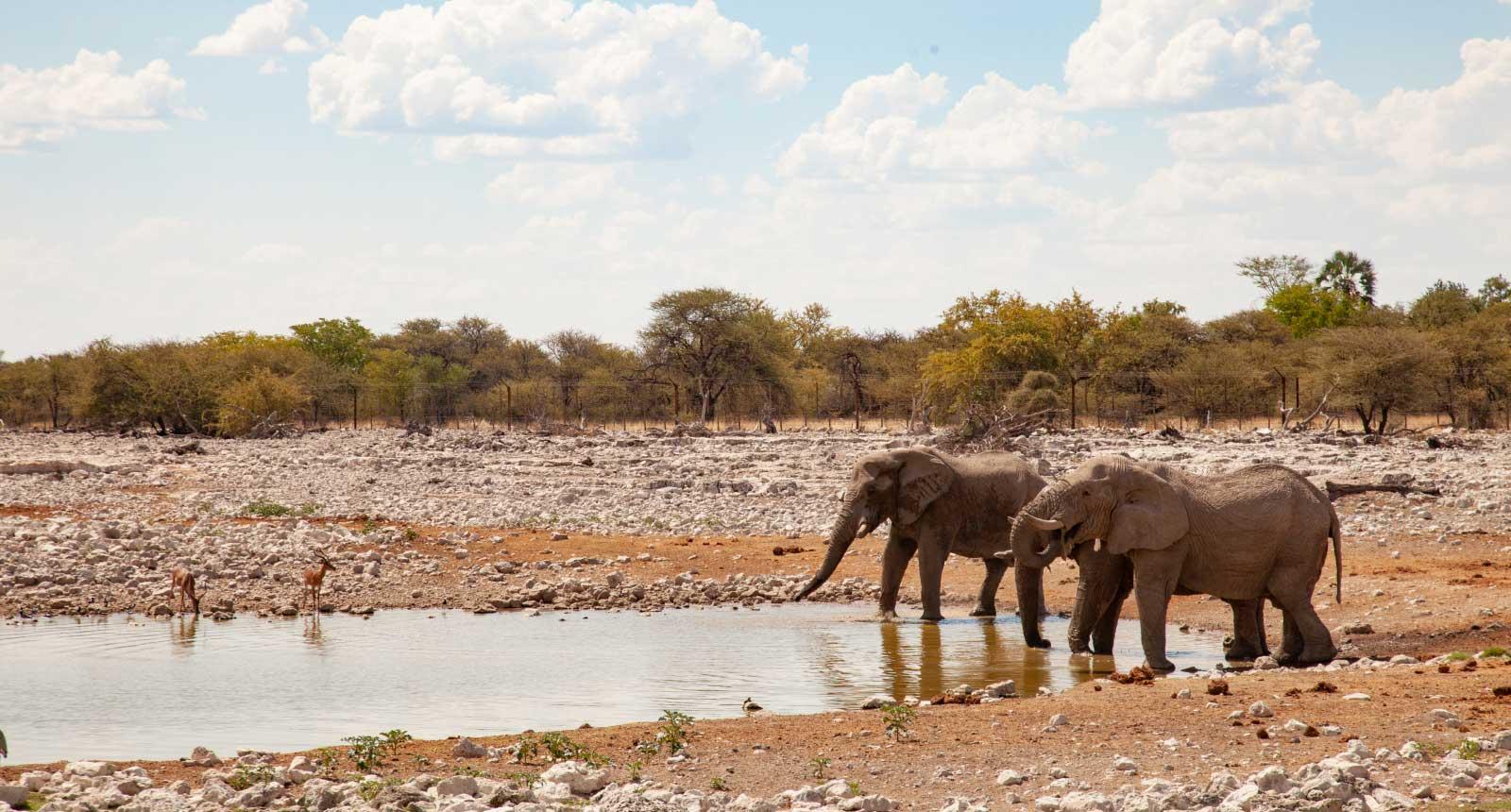 Etosha and Swakopmund Safari