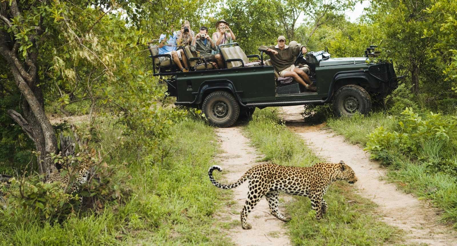 Namibian Safari