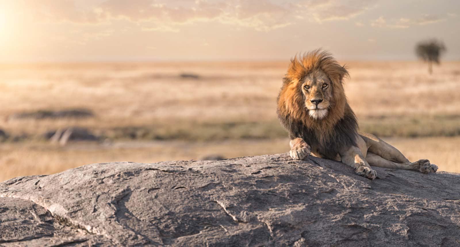 Ngorongoro Crater / Serengeti