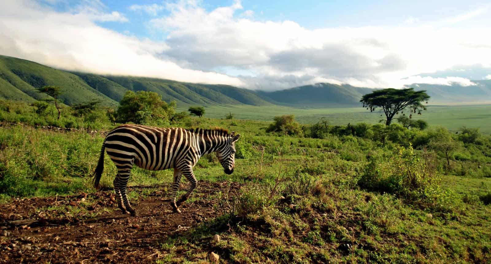 Ngorongoro Crater / Serengeti / Lake Manyara