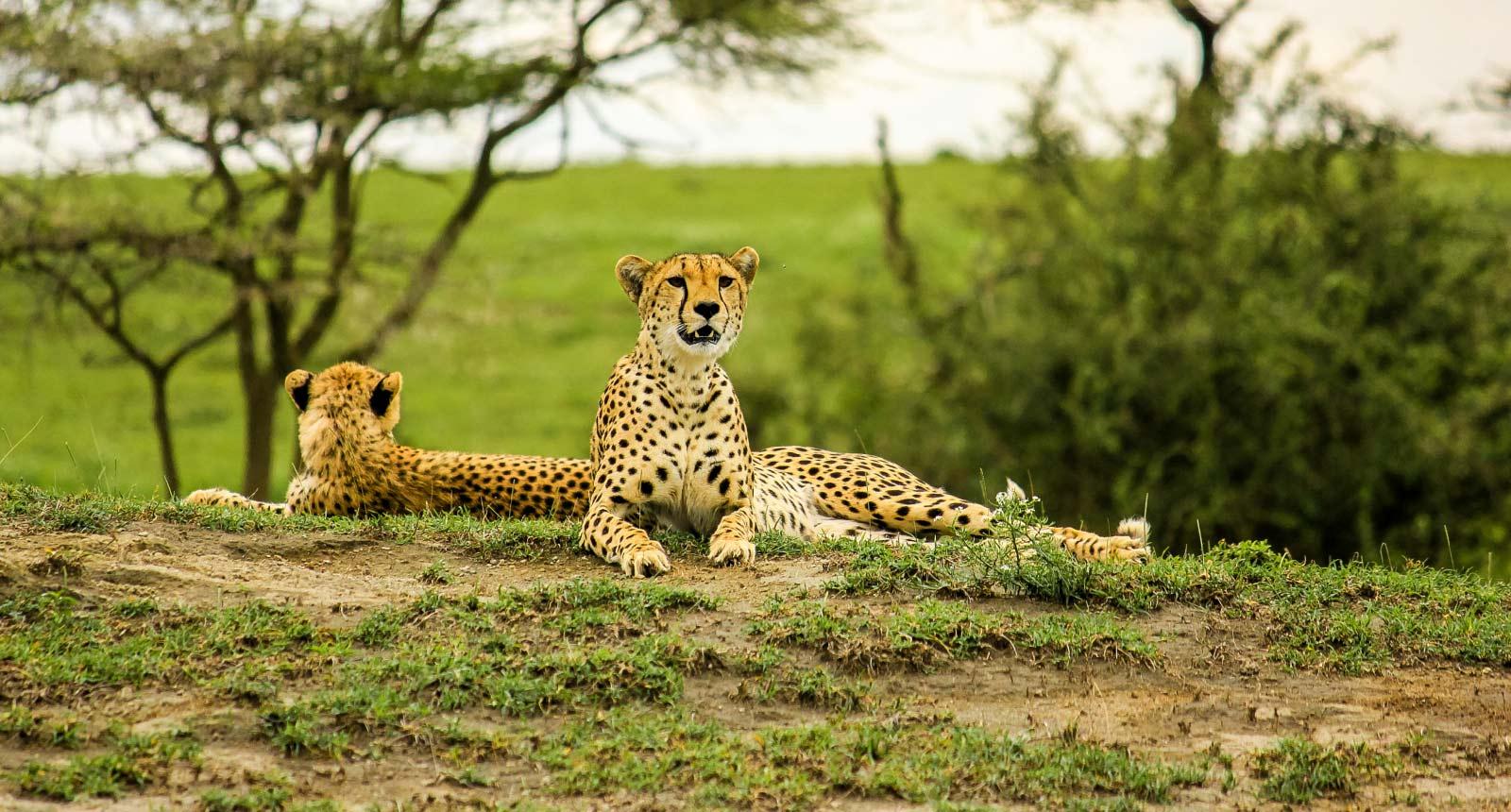 Tarangire / Ngorongoro Crater/ Lake Manyara