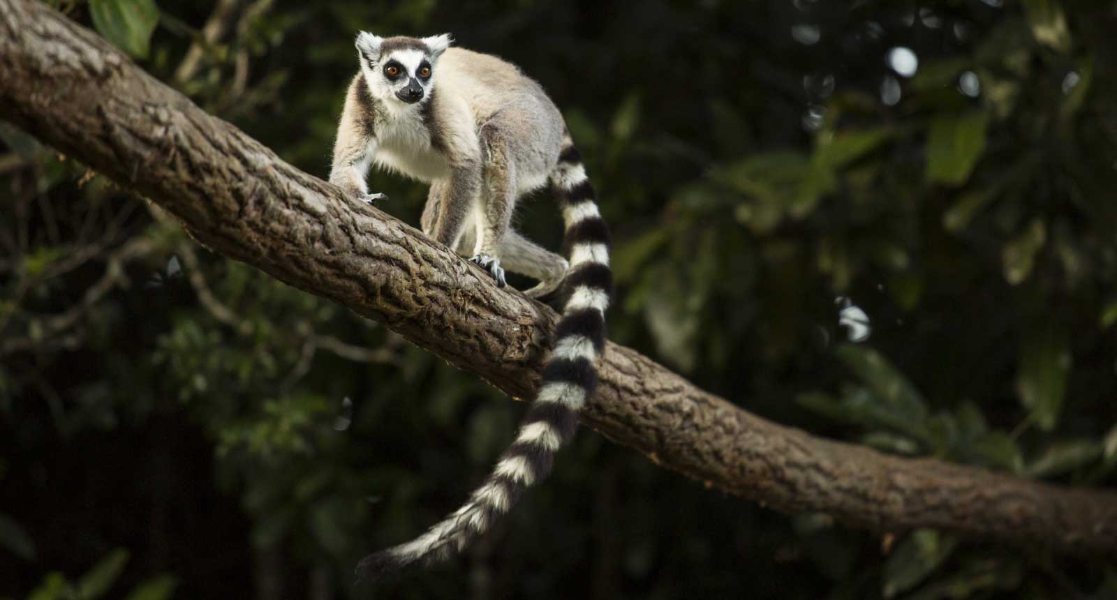 The Marvel of Madagascar