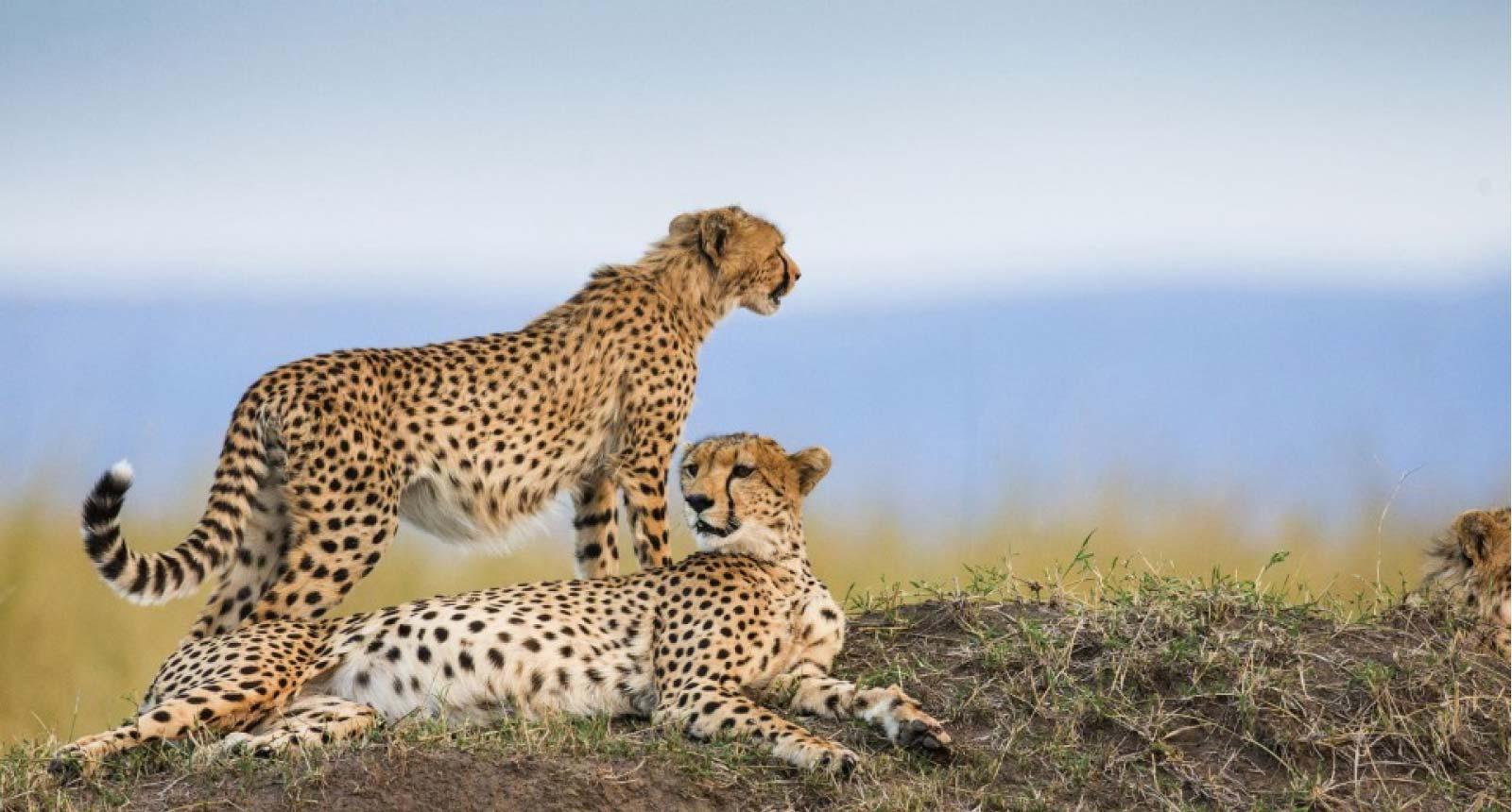 Tsavo, Amboseli National Parks